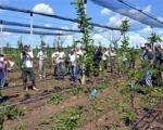 За време распуста узгајају воће и поврће и раде на фарми кокошака