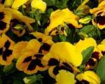 Цвеће у априлу