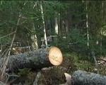 Зашто би требало да дрво одстоји бар годину дана пре ложења