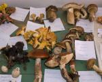 Власотинце: Гљива, организам који храни и лечи (ФОТО)