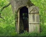 Светилиште у храстовом стаблу у шуми код Владичиног Хана