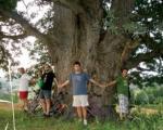 Zašto si branio drvo?