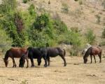 Све више људи посећује Суву планину због дивљих коња