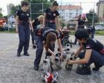 У Нишавском округу скоро четири пута мање ватрогасаца од потребног броја