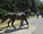 Први карневал животиња у Нишу