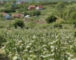 Kuća na selu: Informacije u vezi konkursa u Gradskoj upravi u Prokuplju