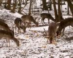Ловци хране дивљач