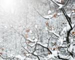 Bliži se vreme zimovanja. Evo kako najlakše da stignete do planina Južne Srbije