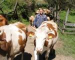 Села Мирче и Штава заборављени у природи испод Копаоника
