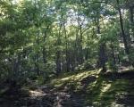 Ускоро: Нетакнута лепота села Брезовица изнад Власотинца
