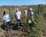 Наводњавањем до већих приноса у виноградарству