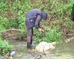 Пси луталице напали стадо и заклали четири овце у селу код Блаца