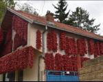 Цело село црвено - Дани паприке у Доњој Локошници код Лесковца