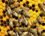 Obuka pčelara početnika i pčelara sa iskustvom