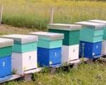 Predavanje za pčelare i voćare u Prokuplju