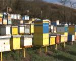 Лош почетак године за пчеларе у Врању
