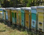 Pčelinjak porodice Stanić koji daje i do 10 tona meda godišnje