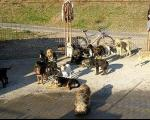 Азил за псе за Топлички крај