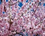 Данас почиње пролеће - најлепше годишње доба