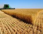 Ministar Nedimović o pšenici: Biće oko milion tona za izvoz