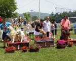Изложба паса свих раса у Пироту