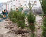 Уместо зграда, зимзелене саднице и нови парк - задовољни грађани Горњоматејевачке улице изражавају захвалност