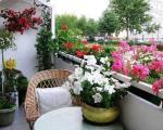 Цвеће на балкону