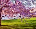 Сутра почиње пролеће