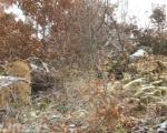 Бесправна сеча шума у општини Трговиште