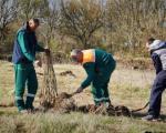 Nove sadnice na Moravi kod Trupala - zasađeno 100 stabala hrasta lužnjaka