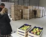 Nakon pokušaja prevare aleksinačke firme sa izvozom voća u Rusiju, uvodi se aplikacija o poreklu robe