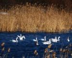 """""""Лабудово језеро"""" код Пирота (ФОТО)"""