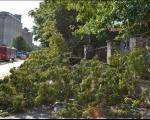 Sređivanje Prokuplja nakon jakog nevremena: Uklanjanje slomljenih grana i šuta