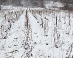 На Светог Стефана виноградари траже бољу противградну заштиту