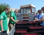 Има ли наде за произвођаче вишње у Топлици