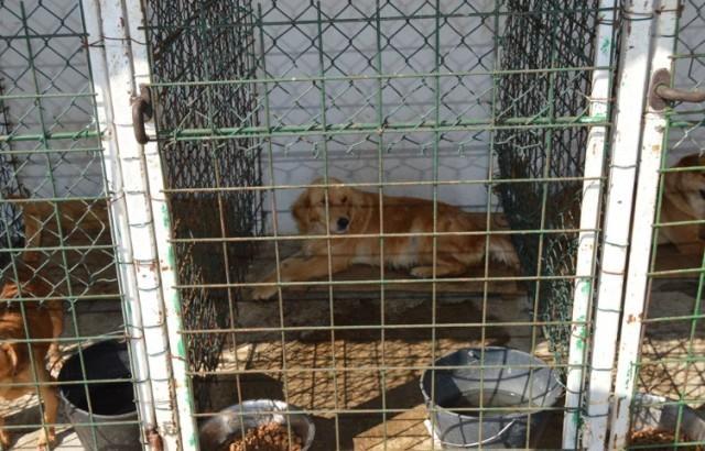 Отворен Азил за псе у Лесковцу