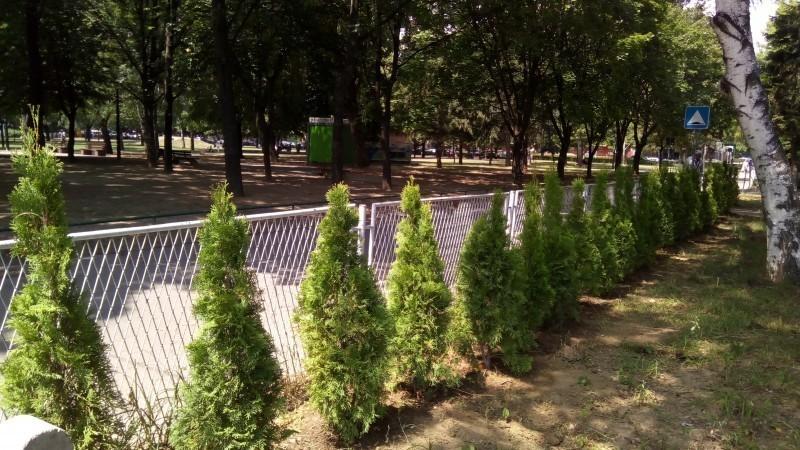 """Од највеће градске општине четинари као ограда за ОШ """"Свети Сава"""""""