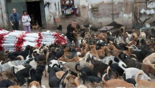 Niš na ulicu šalje 450 pasa iz azila!?