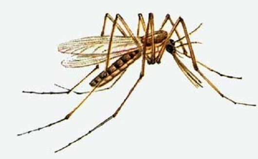 Заштитите пчеле: Од сутра други циклус запрашивања комараца