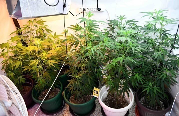 У околини Ниша откривена лабораторија за узгој марихуане
