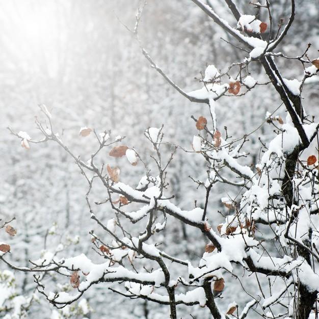 зимовање