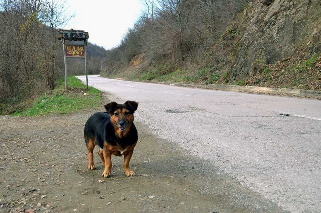 Пас већ годину дана чека власника на сеоској станици код Куршумлије