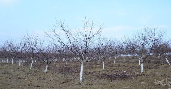 Киша добра за све пољопривредне културе на територији Топлице