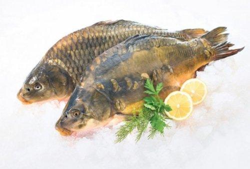 Muke ribočuvara u okolini Niša: Sve više ribokradica zbog Svetog Nikole
