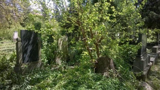 Zaraslo rastinje na grobovima, Foto: Južna Srbija