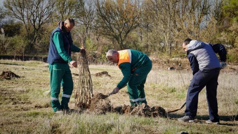 Нове саднице на Морави код Трупала - засађено 100 стабала храста лужњака