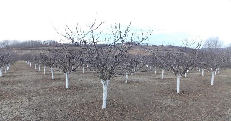 Велики минус опасан за пшеницу, али не и за воћњаке у Топлици