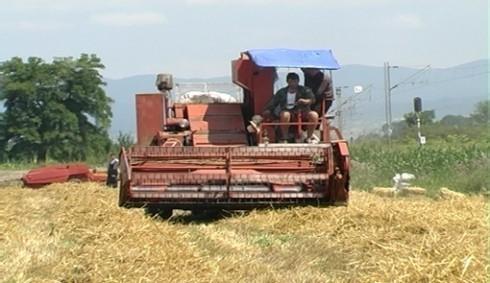 Детаљ из околине Лесковца: комбајнери нису увек поштовали договор