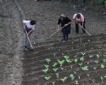 Od EU 3,8 miliona evra za poljoprivredu