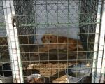 Otvoren Azil za pse u Leskovcu